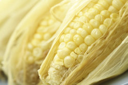 Corn Cazuela